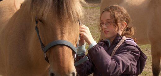 Pferde Marsha und Janek