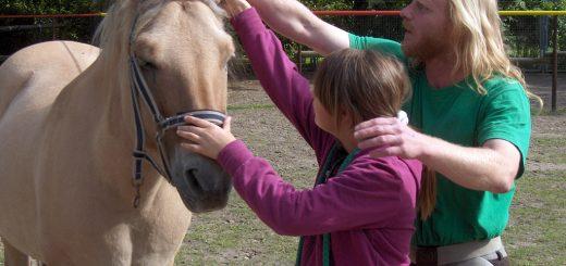 Pferde AG: Mähnenpflege