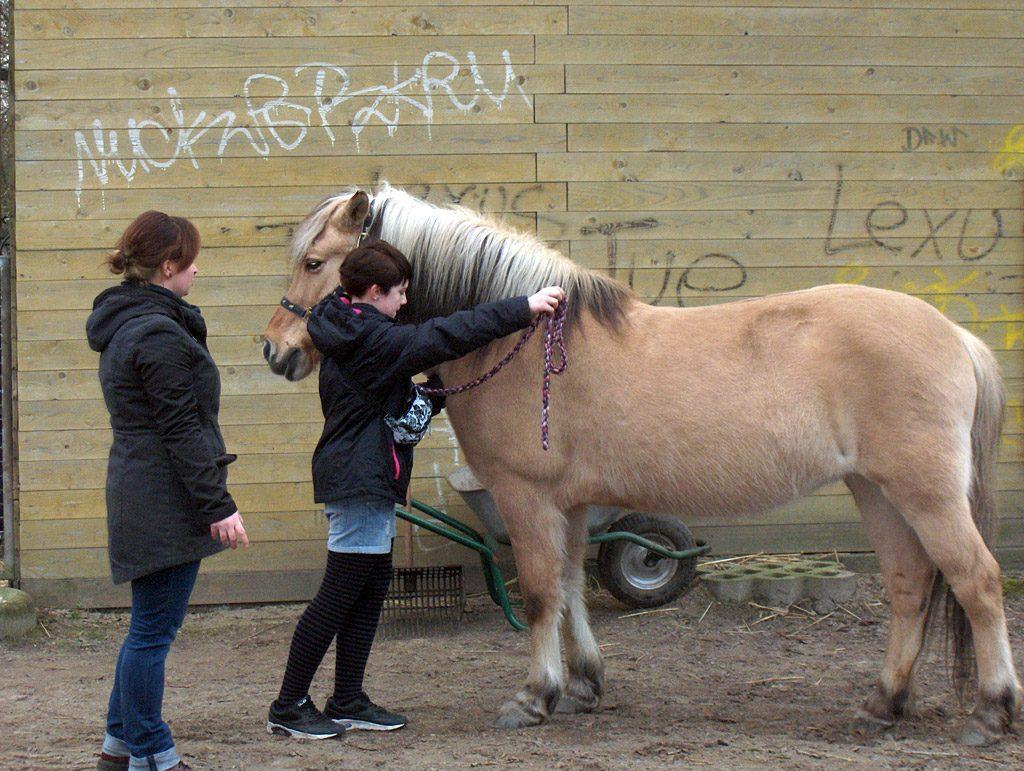Pferde AG: Geschirr anlegen