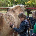 Pferde AG: Fell striegeln