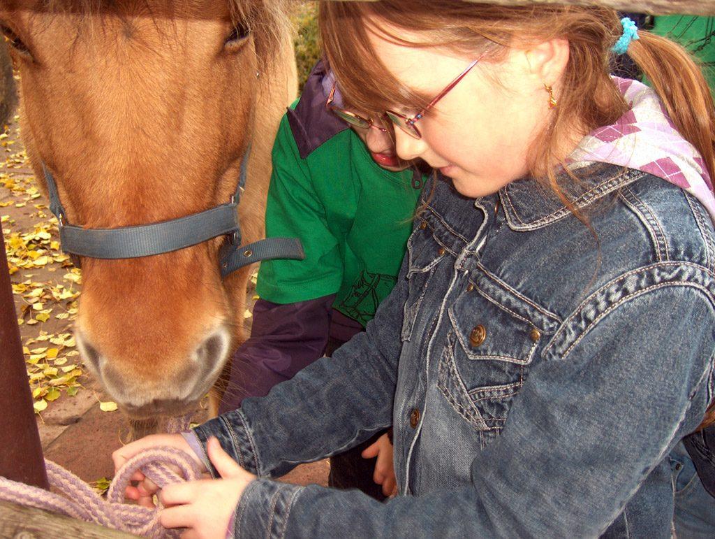 Pferde AG: Pferdeleine befestigen