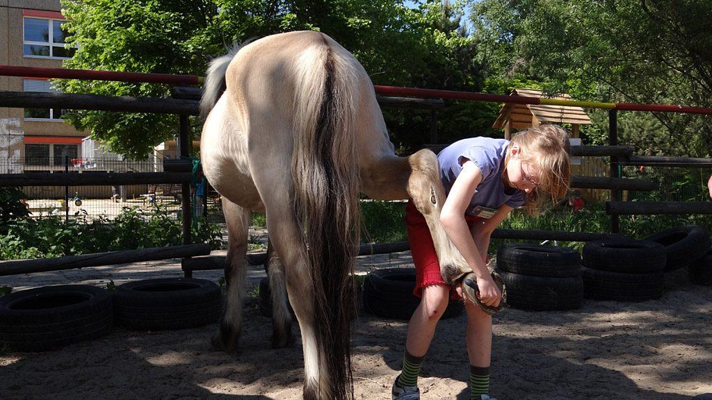Pferde AG: Hufpflege