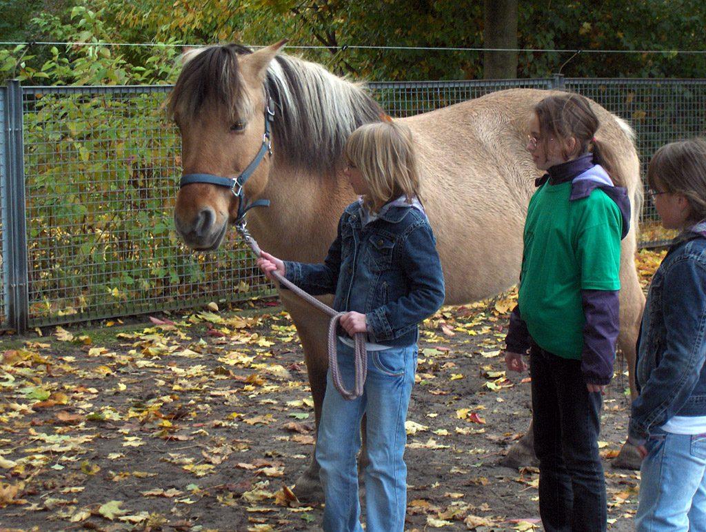 Pferde AG: Pferd ausführen