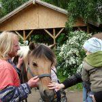 Reiterhof: Besucherin streichelt Pferd Marsha