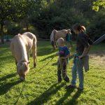 Kinder und grasende Pferde