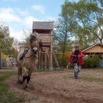 Pferd Janek mit Pfleger beim Longieren