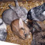 Tiere im Streichelzoo des ASP