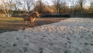 Frischer Sand für die Pferde