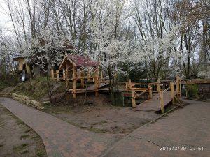 Schlehenblüte am Aufgang zur Burg und Hexenhaus