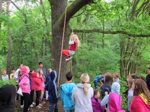Seilklettern im Wald