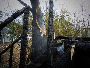 verbranntes Baumhaus