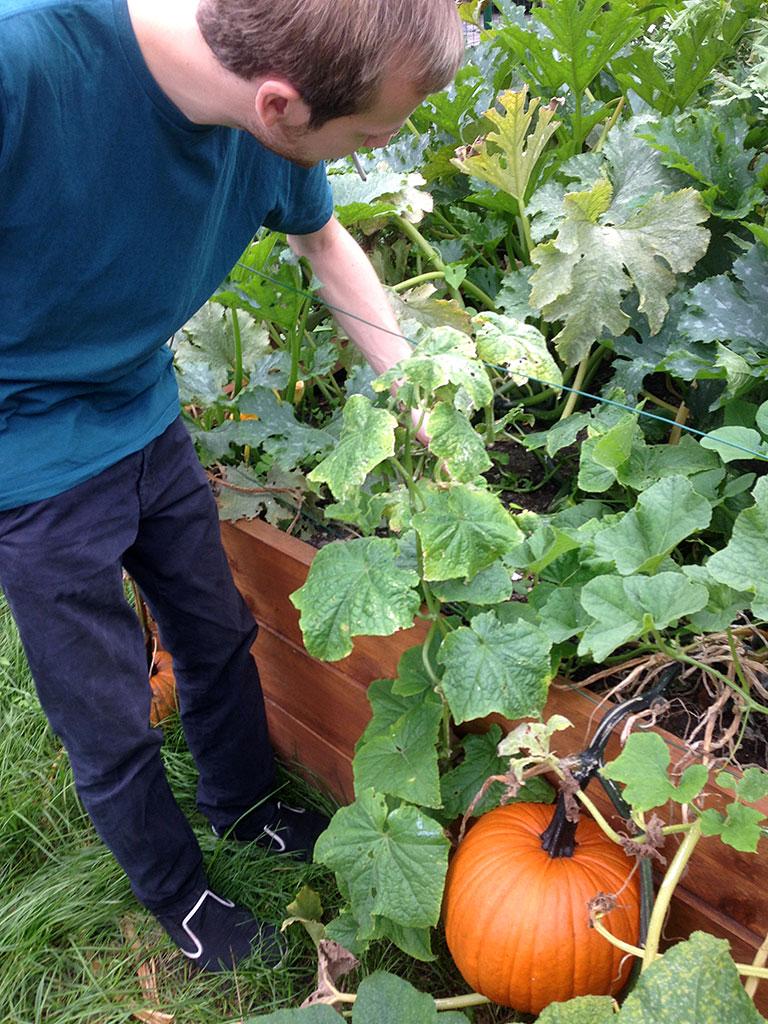 Selbst angebautes Gemüse und Obst