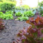 Angebautes Obst und Gemüse