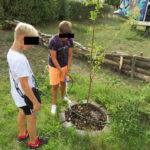 Kinder pflanzen einen Apfelbaum